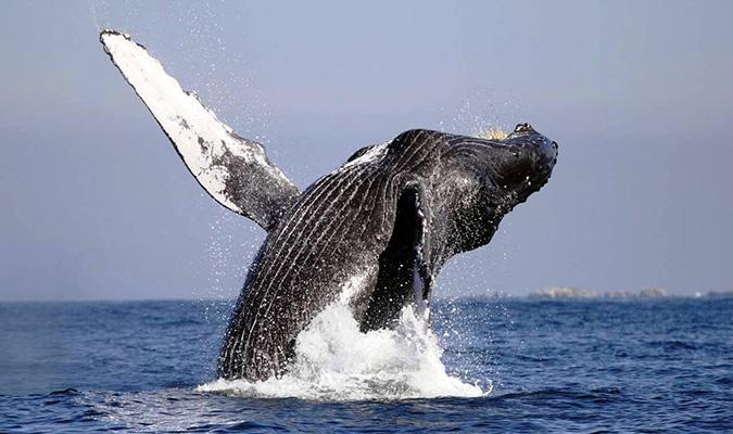 Baja Adventure Whales