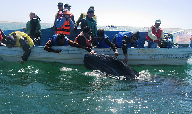 Whale Watching Baja Family Trip
