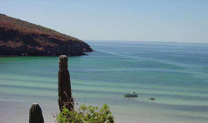 Nature in Baja Espiritu Santo