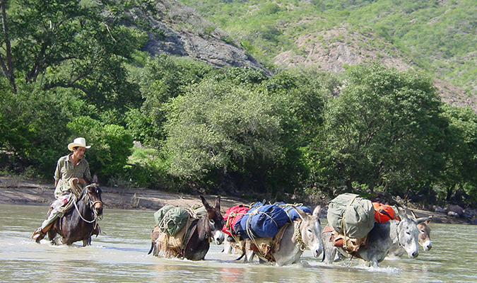 Mules Crossing in Copper Canyon