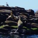 Sea Lions Los Cabos