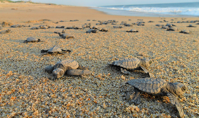 Nature Discover Baja Sea Turtles