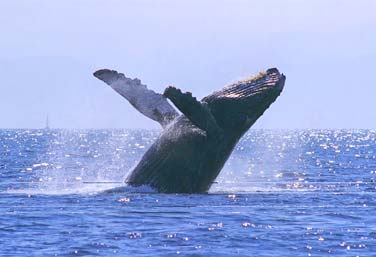Whale watching adventure in baja