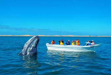 Wildlife encounters in baja
