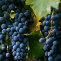 wine-dos-buhos