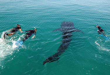 Swim with Whale Sharks and visit ancient ruins