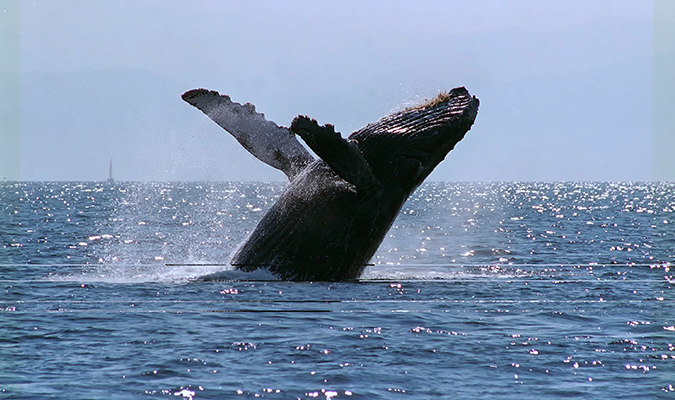 journey-mexico-whale-watching-baja