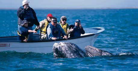 whale-whale-watching-baja
