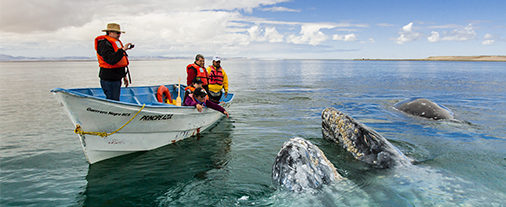 Save 30% off - Whale Watching & Sea Turtles