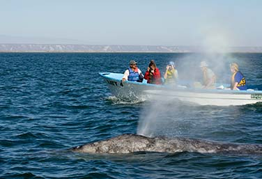 top-itinerary-sea-cortez