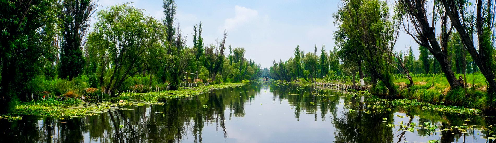 Axolotls And Chinampas In Xochimilco Nature Conservation Experience