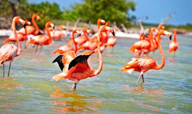 Península de Yucatán, dónde ir, comer y quedarse. 6