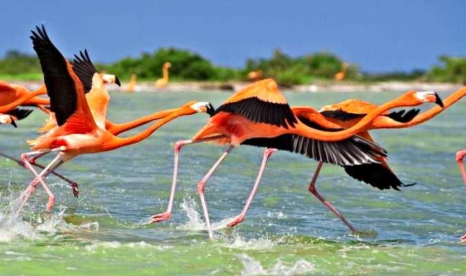 Vea los flamencos voladores en la Reserva de la Biosfera de Celestún