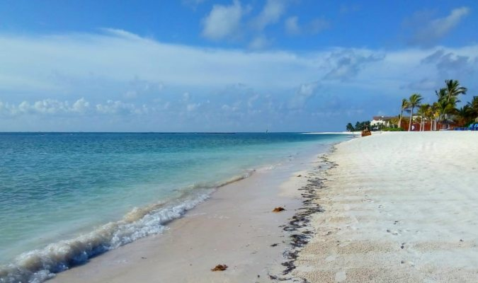 Update on Sargassum Seaweed Affecting Mexico's Beaches - Journey Mexico