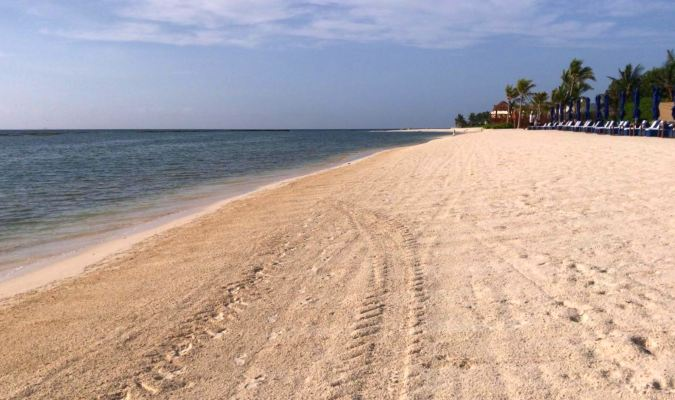 Update on Sargassum Seaweed Affecting Mexico's Beaches